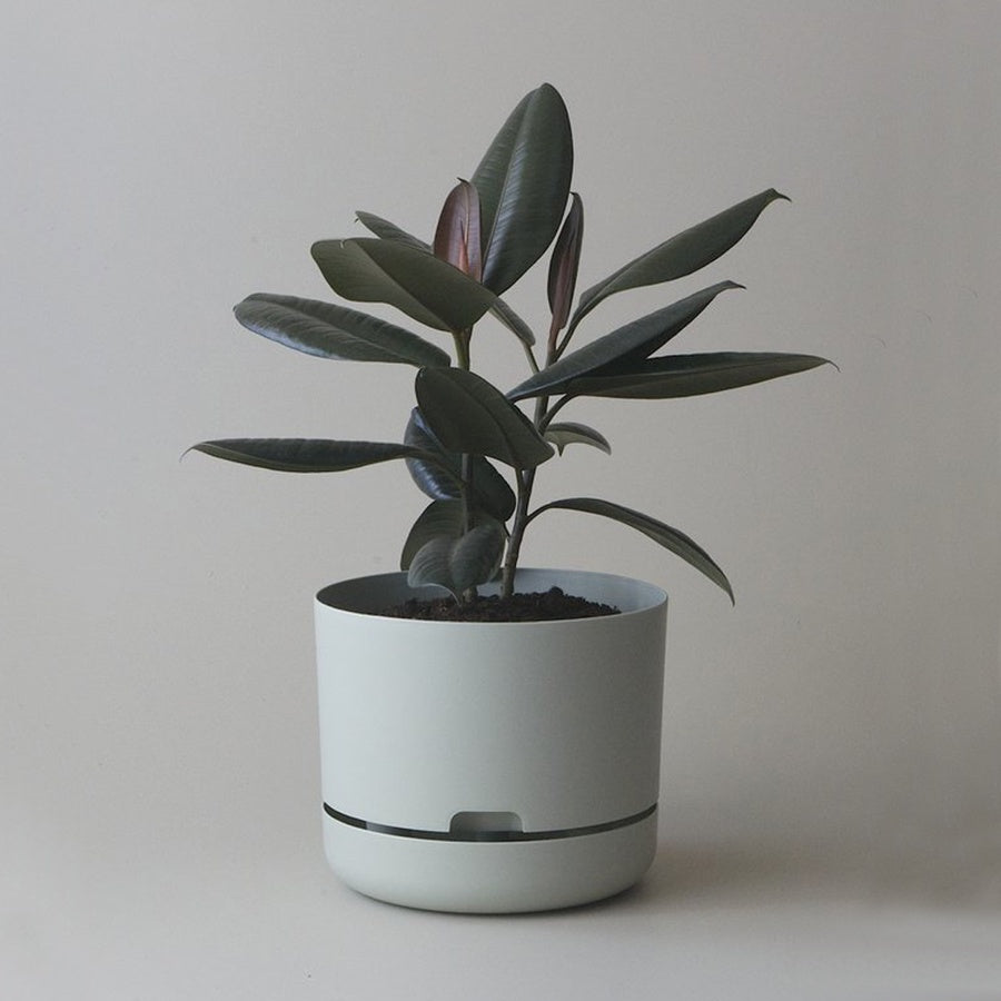 MR KITLY x Decor Selfwatering Plant Pot Fog