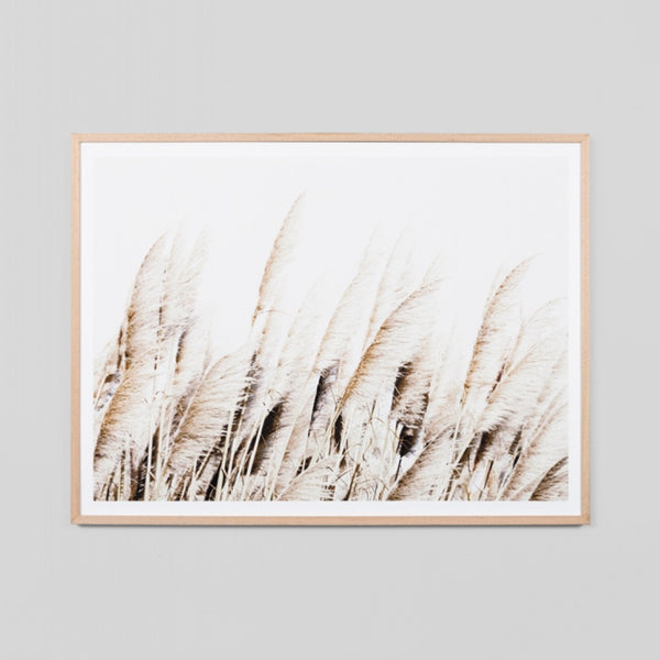 Pampas Breeze Art Print by Middle Of Nowhere