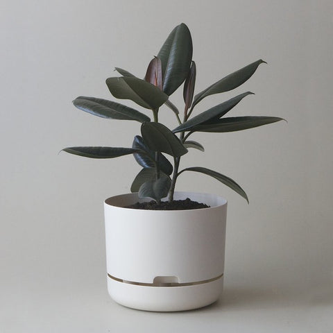 MR KITLY x Decor Selfwatering Plant Pot White Linen