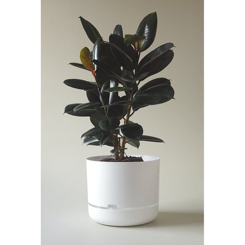 MR KITLY x Decor Selfwatering Plant Pot (Bright) White