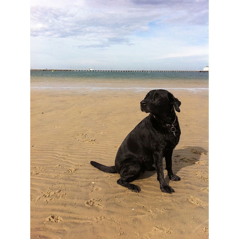 Shop Dog Puzzle - Jess The Lab at West Beach