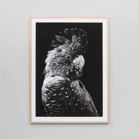 Black Cockatoo Grey 85x114cm
