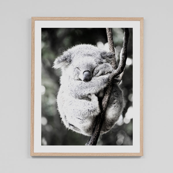 Koala Friend Bushfire Appeal Edition