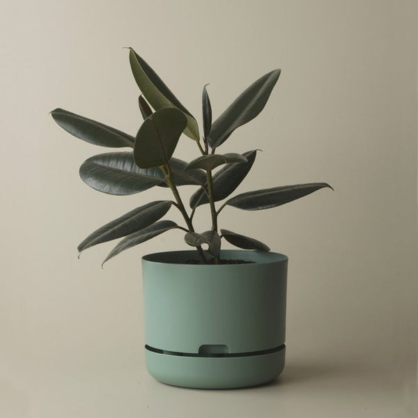 MR KITLY x Decor Selfwatering Plant Pot Cabinet Green