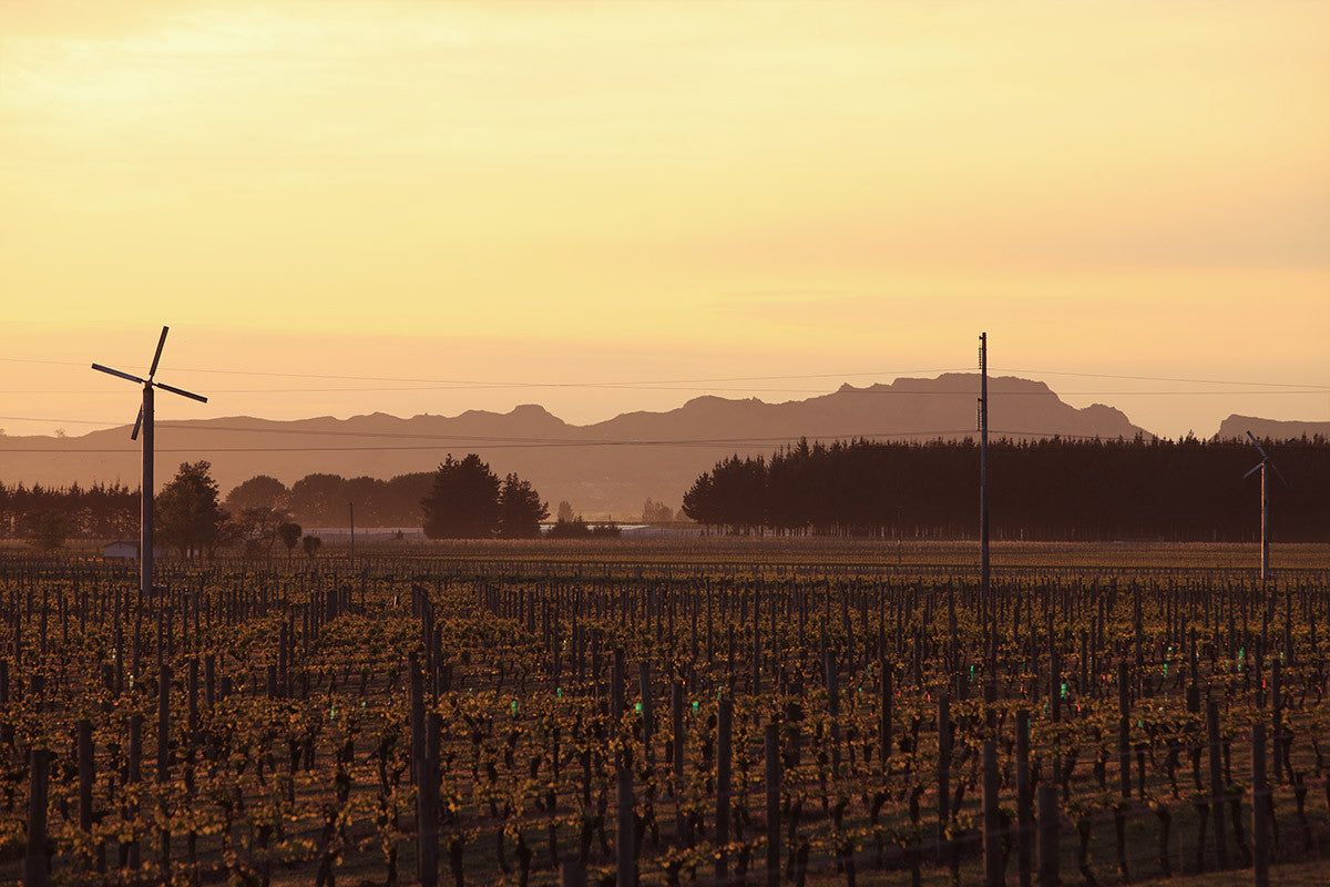 Te Awa Vineyard