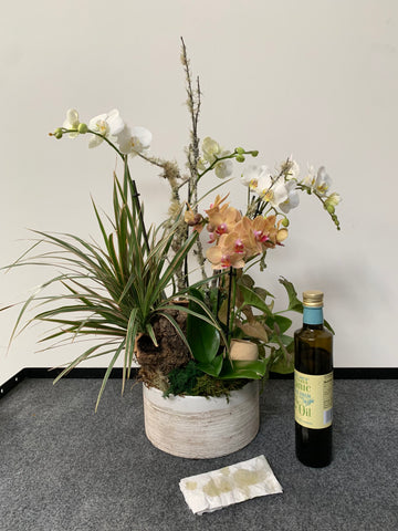florist hack, use olive oil and water on a rag to clean household plants and orchid leaves and make them shine