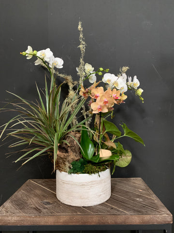 Planted florist arrangement of house plants and orchids by Gorgeous and Green