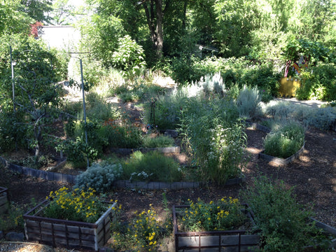 Boise garden where Gorgeous and Green foraged for arrangements