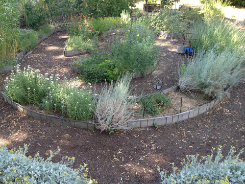 Boise Garden with amazing local grown blooms and foliage for cutting by Gorgeous and Green