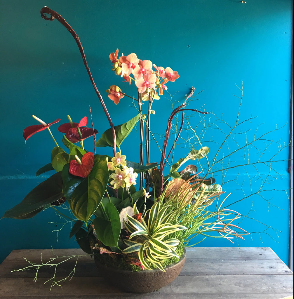 Planted arrangement, Available April 7th