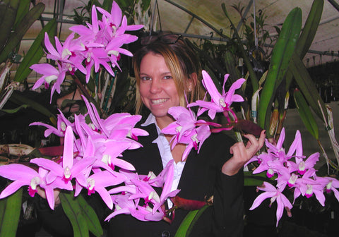 And One For The Laelia Lovers New Species On Sale Now