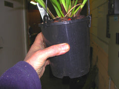 "140 mm packwell (Basic 6"" Cymbidium pot)"