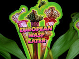 Wasp eaters     Sarracenia  Extra large healthy plants    tall red