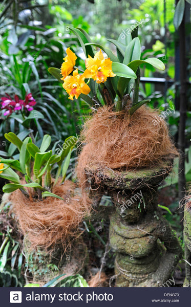 Coconut Fibre Coir For Lining Baskets And Mounting Orchids