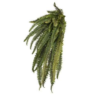 Floral Interiors Fern Boston Hanging Bush