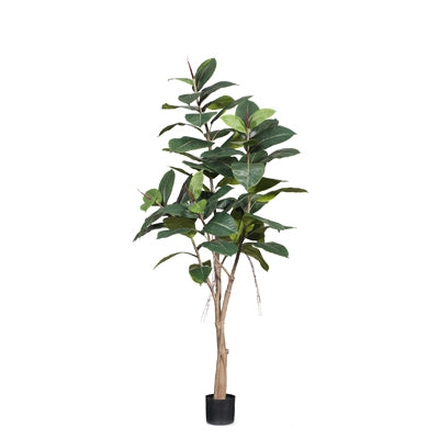 Floral Interiors Rubber Tree LG