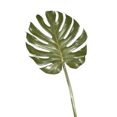Floral Interiors Monstera Leaf