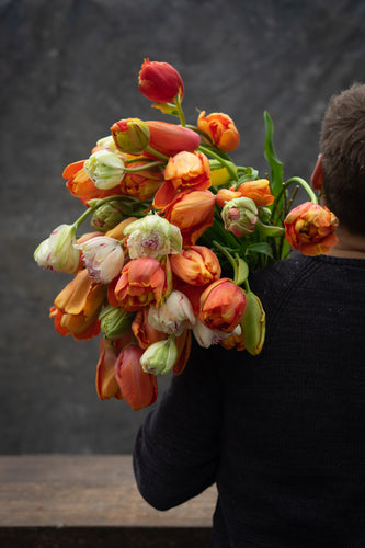 Tulipmania -  two business day delivery!