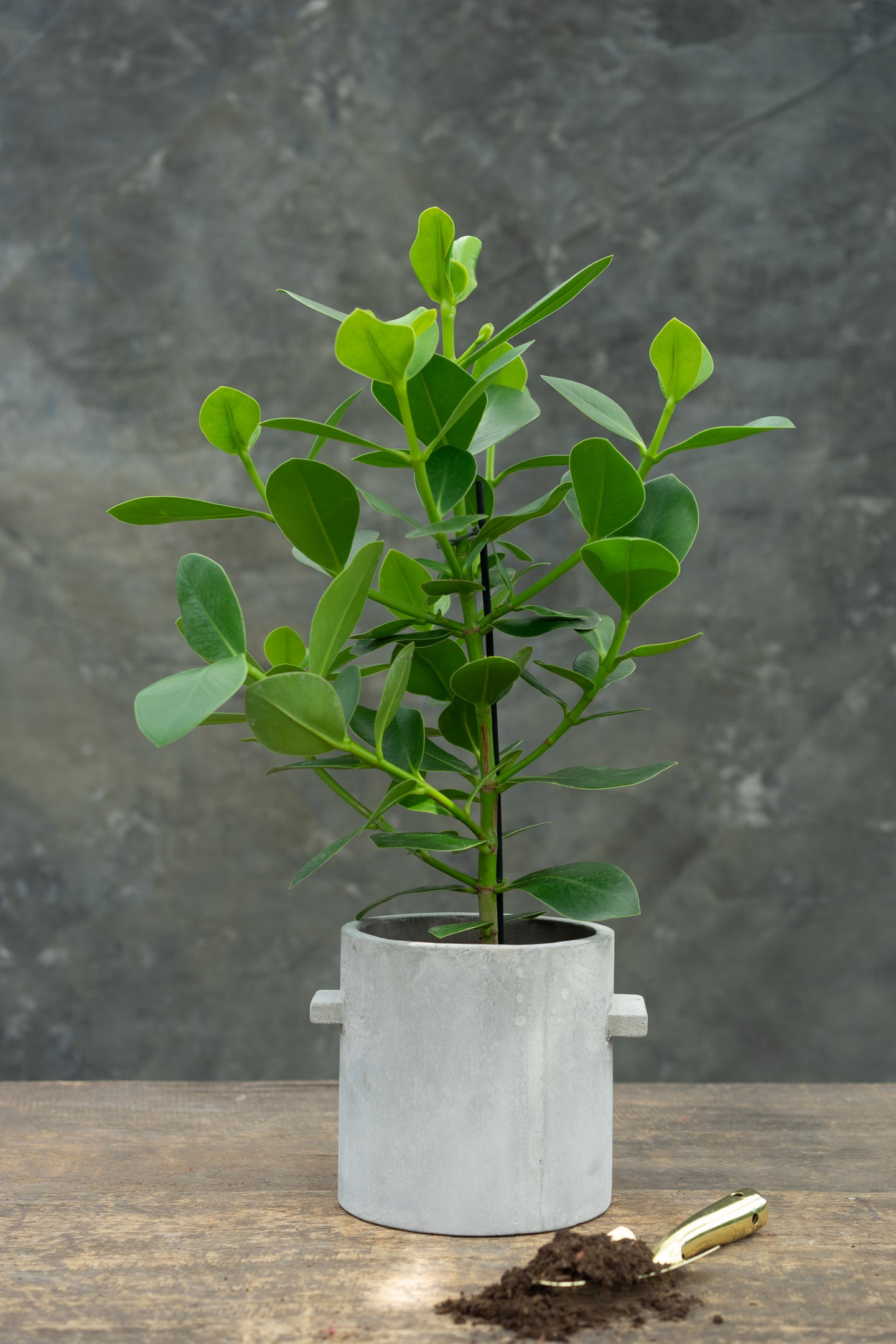 Autograph Plant - sign up for a new lease on life!