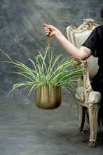 Load image into Gallery viewer, Gold hanging pots - set of three for your hanging plants!