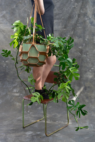 Monstera - flying high with modern style