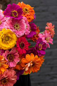 'Feature bouquet' Zinnias! - next day delivery!