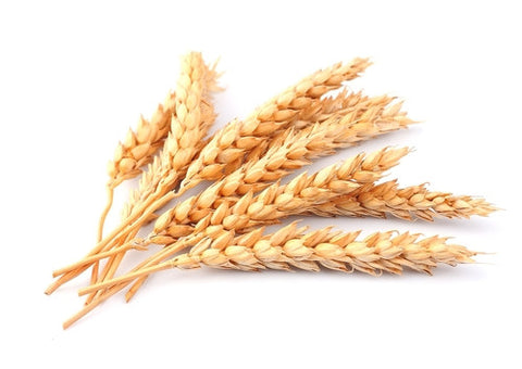 whole grain wheat pasta big brick house bakery   pasta what clip art can you add to printful wheat clipart png