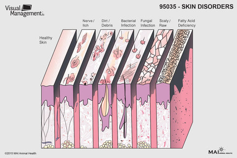 EduPad™ - Skin Disorders