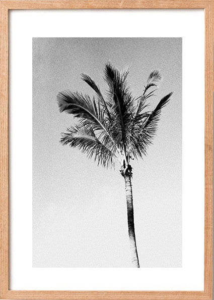 Palm Life - Limited Edition Photography