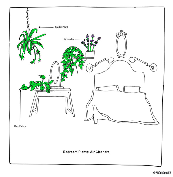 RIGHT PLANTS FOR THE RIGHT ROOM: THE BEDROOM