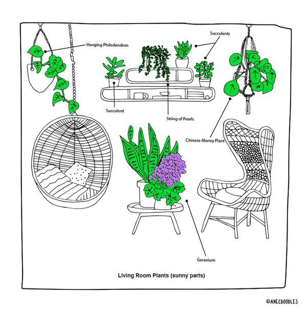 RIGHT PLANTS FOR THE RIGHT ROOM: THE (SUNNY) LIVING ROOM