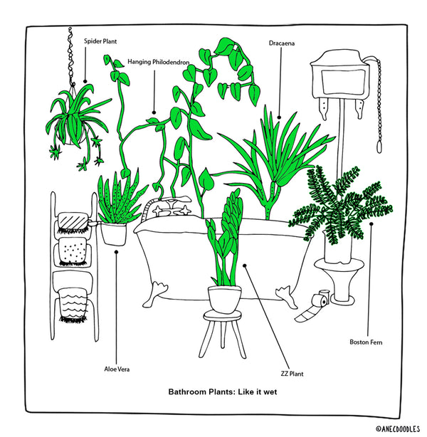 RIGHT PLANT FOR THE RIGHT ROOM: THE BATHROOM