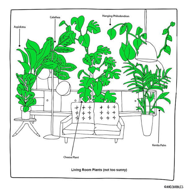 RIGHT PLANTS FOR THE RIGHT ROOM: LIVING ROOM (NOT SO SUNNY)