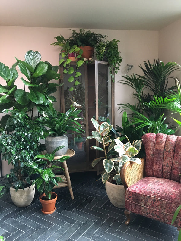 Home plant install