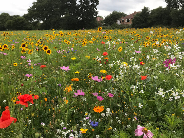 HOW NOT TO KILL YOUR WILDFLOWER MEADOW