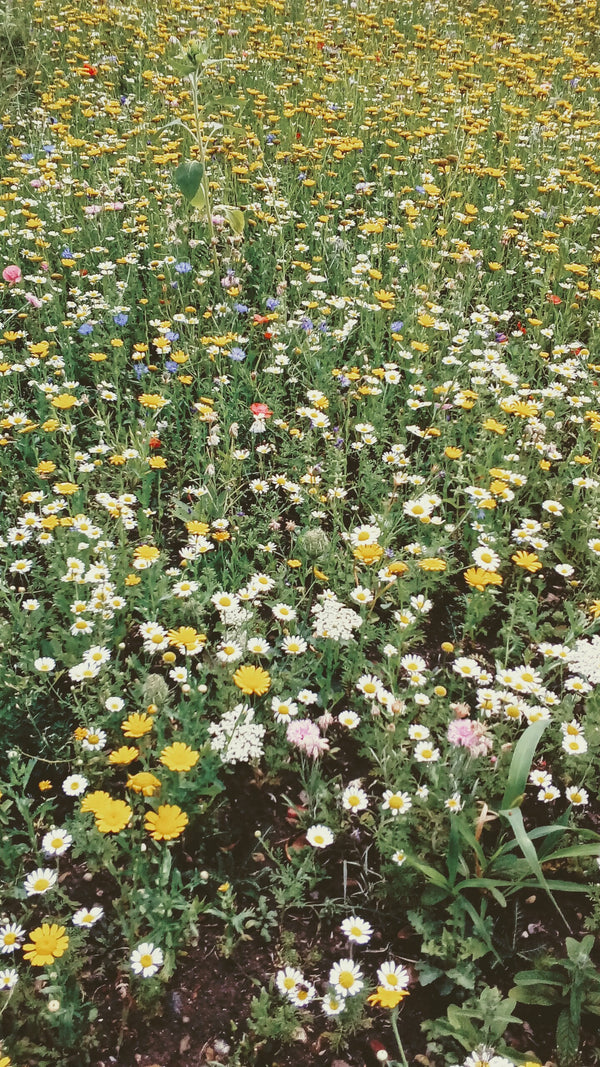 MAKE YOUR OWN MEADOW