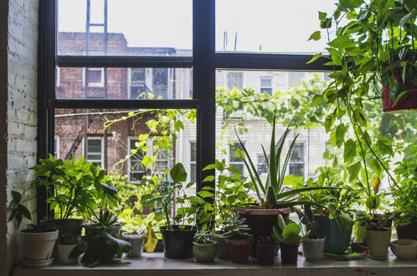 LET THERE BE LIGHT: HOW TO LOVE YOUR PLANTS IN WINTER