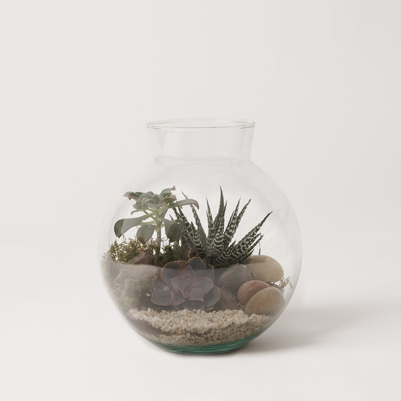 Terrarium Tuesday