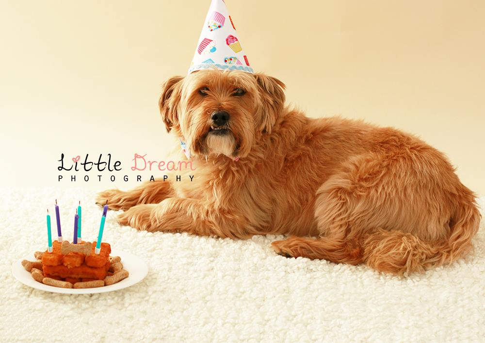 Pet Party Hat  - Bow Tie - Cake Smash - Pet Photography