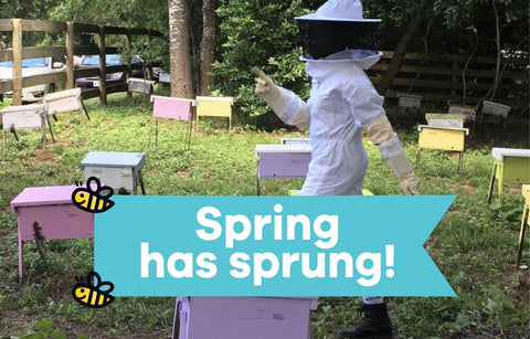 The Springtime Buzz on Bees