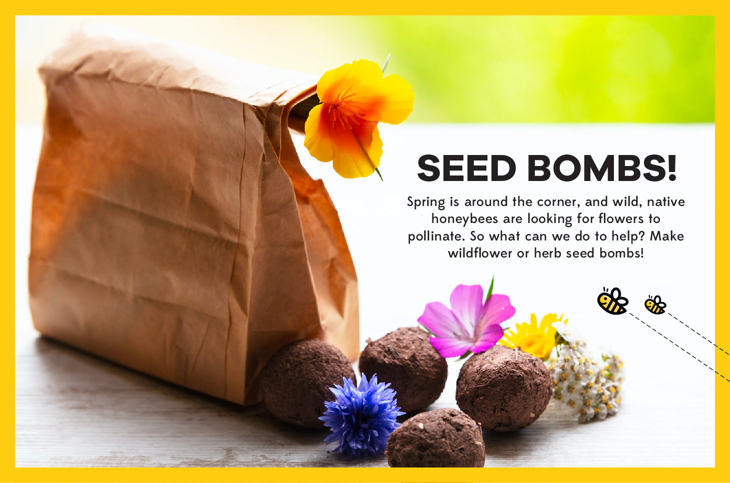Seed Bombs for Spring: 🌱→ 🌼