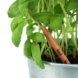 Plantable Pencils (3 for $10)
