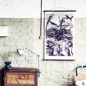 erstwhile Birds Wall Chart