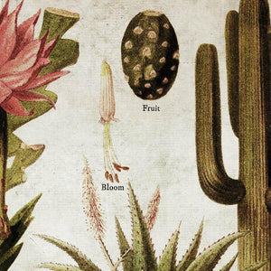 erstwhile Cactus & Succulents Wall Chart