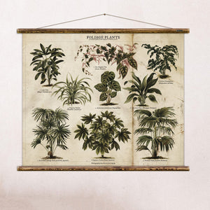 erstwhile Foliage Plants Wall Chart