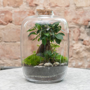 Green Factory Forest Medium Polyscias Terrarium