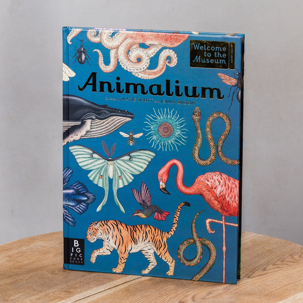 Katie Scott Animalium - Welcome to the Museum
