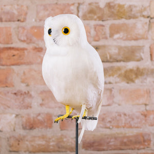 Puebco Large White Owl