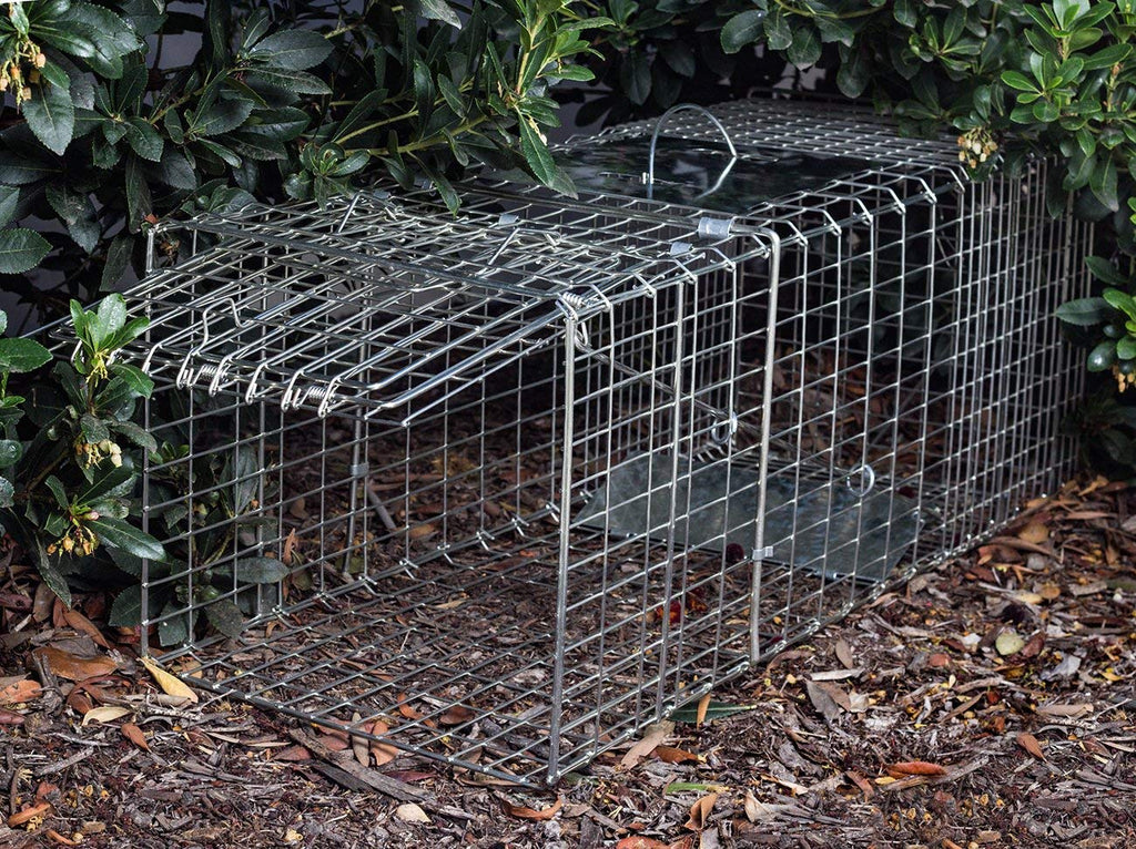 Daily Steals-Safe & Humane Live Animal Trap-Outdoors and Tactical-