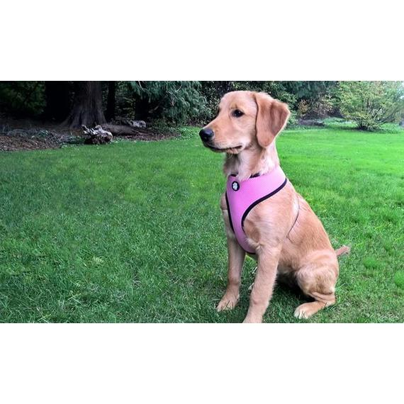 Daily Steals-Furhaven Mesh Dog Harness with Comfort Padding Trim-Pets-Black-Small-